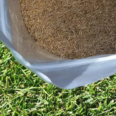 Grass REPAIR (mistura de sementes) - grass4you
