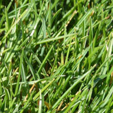 Relva natural em tapete PRIME - grass4you