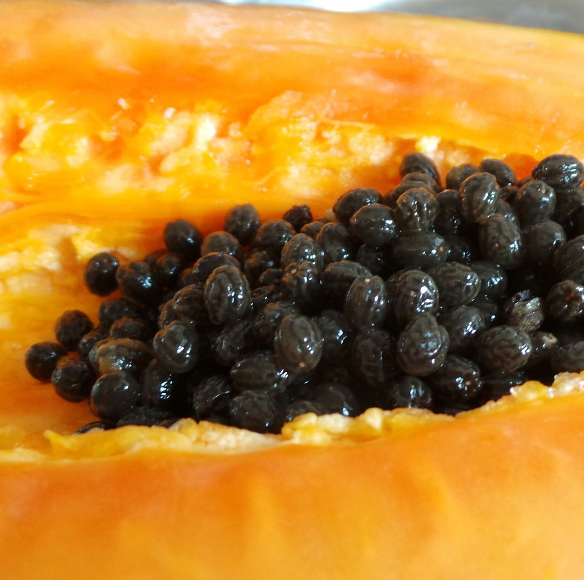 Papaya Seeds in Plasma Water
