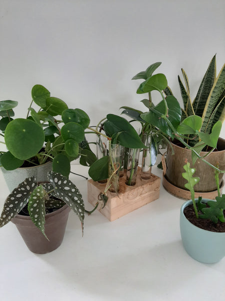 07/09/2019 Workshop Planten stekken