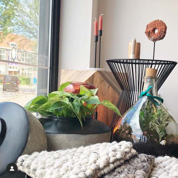 17/10/2019 Workshop Planten styling en verzorging