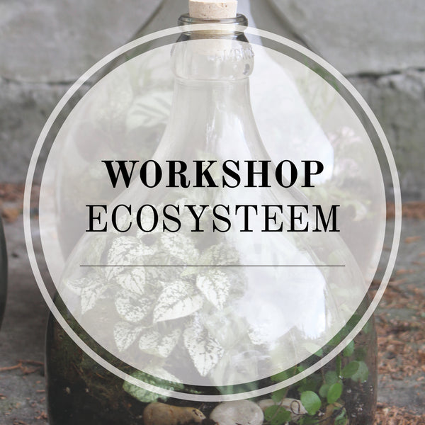 Workshop ecosysteem in fles (datum en tijd nader af te stemmen)