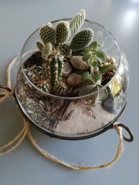 workshop cactussen in glazenbol