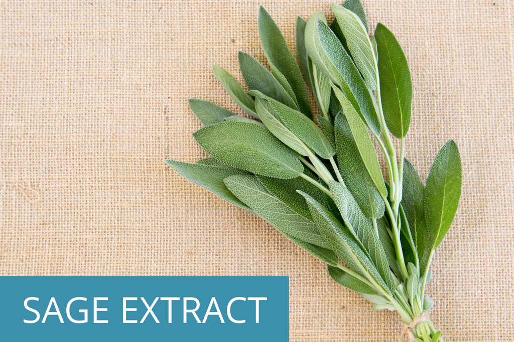 fresh bundle of sage leaves; you'll find natural sage extract in TEENOLOGY shampoo for optimal hair and skin health