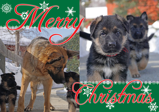 Pawsitively Christmas Holiday Cards