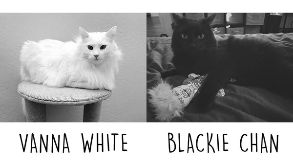 Vanna White and Blackie Chan cats Oh My Paw'd