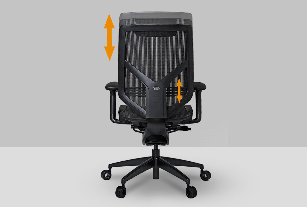 Height Adjustable Back and Lumbar Support
