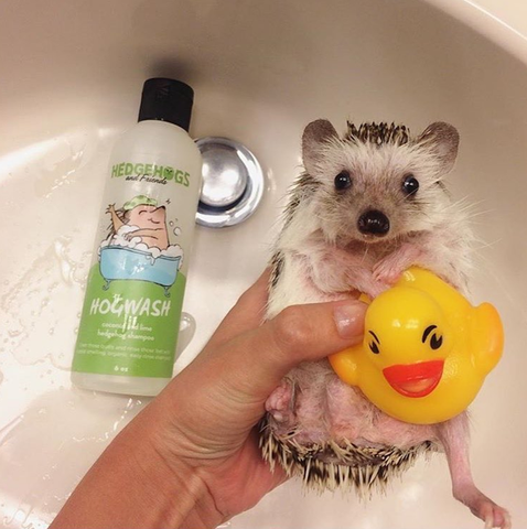 Thank you friends! Here's 15 hedgehogs taking baths to make you totally lose your cool!