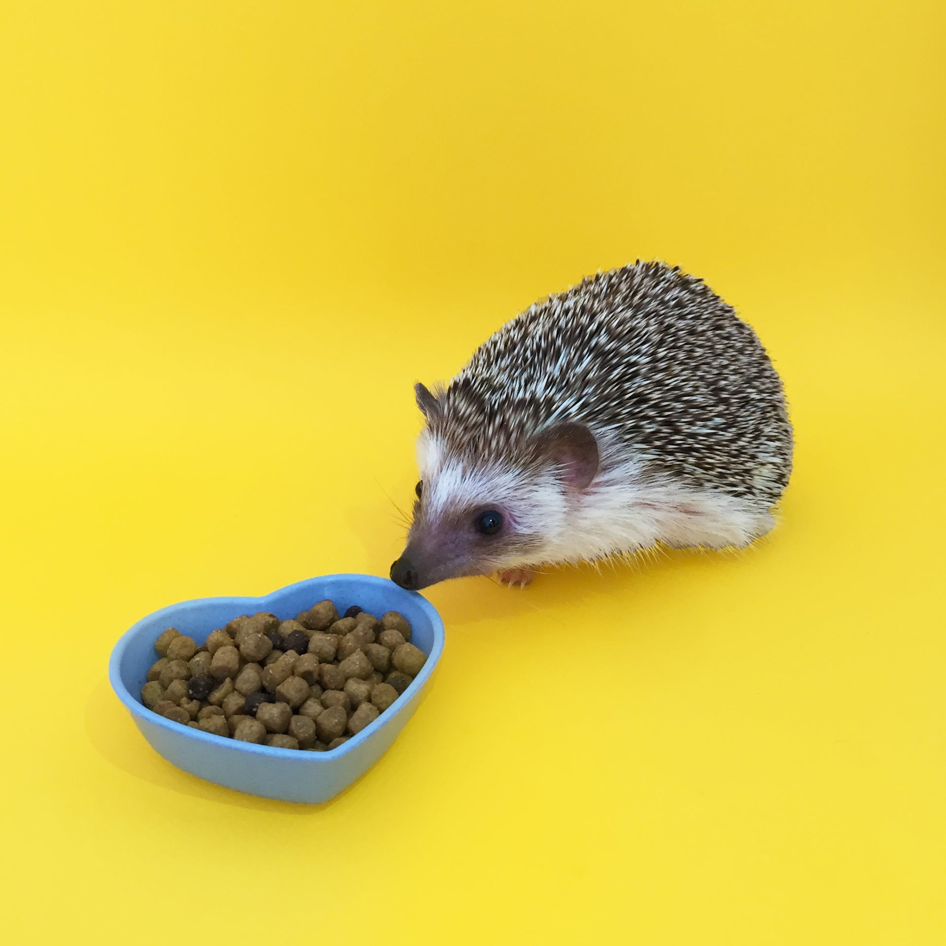 Small Heart-Shaped Food Bowl