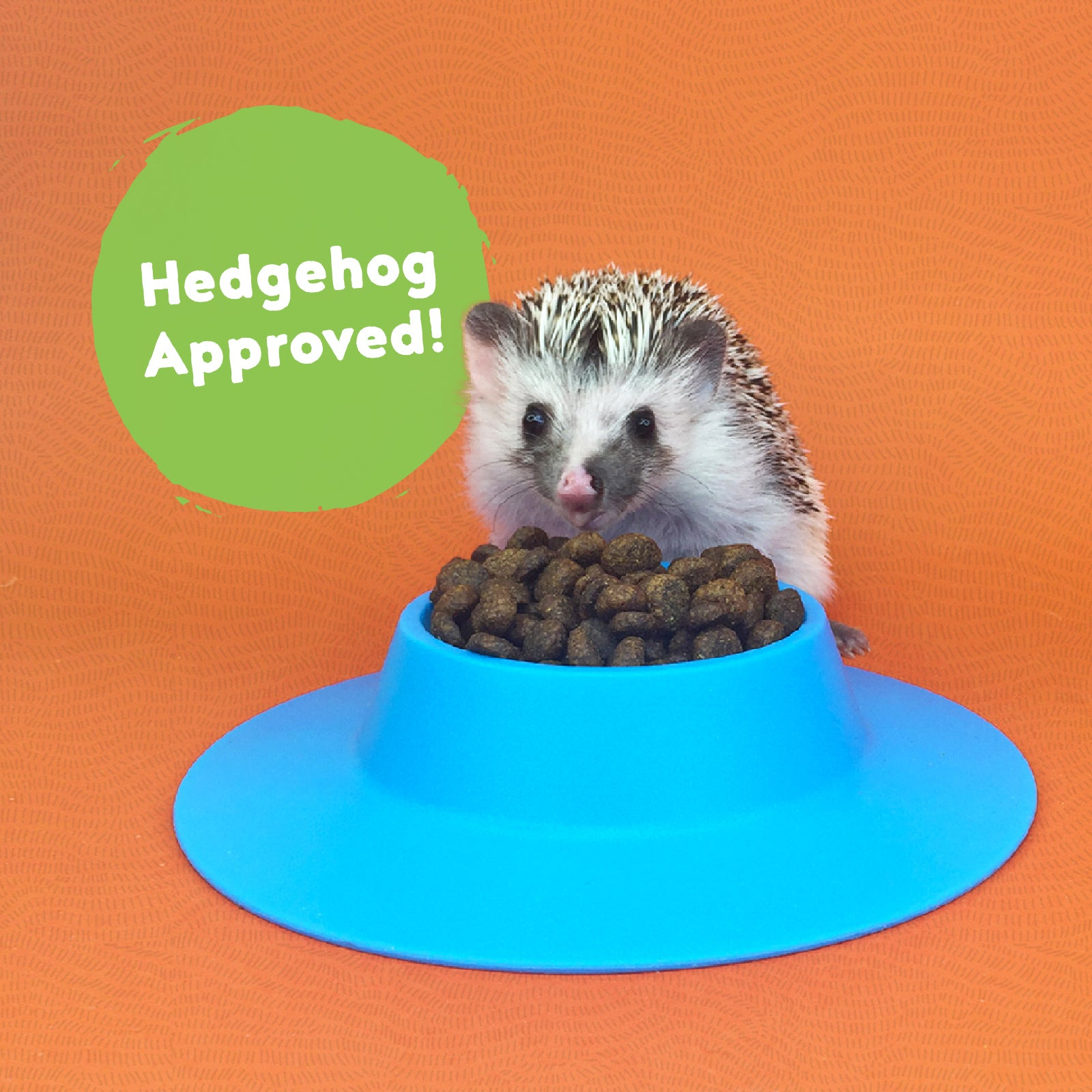 Really Good Hedgehog Food
