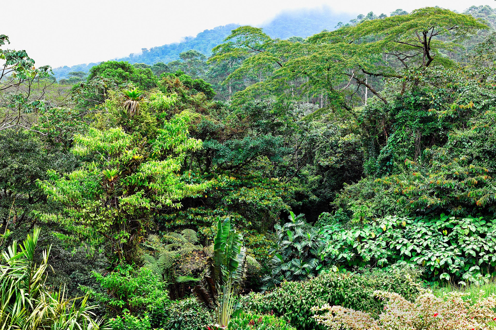 Jungle Lushness - Arenal area Costa-Rica