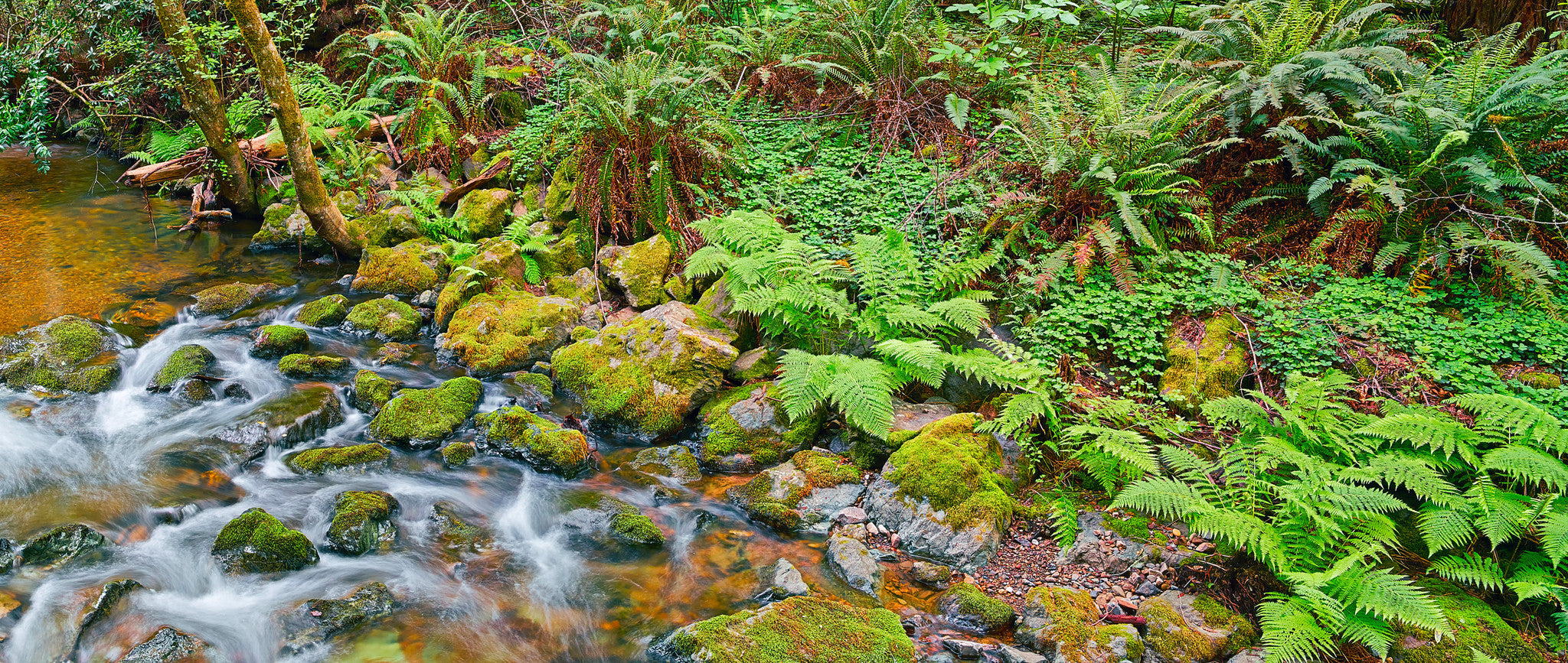 John Muir's Stream - Muir Forest California