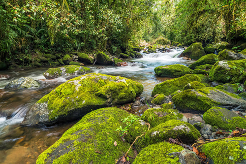 Chiriqui Mountain Stream