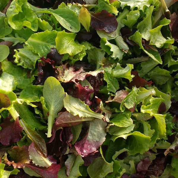 HHHa Salad Mix, various