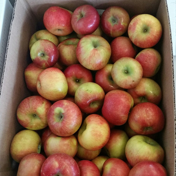 PIN Apples - Honeycrisp, #2 special box