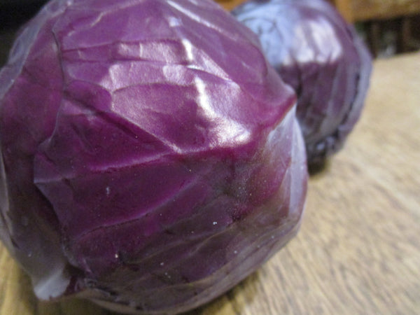 CCP Red Cabbage