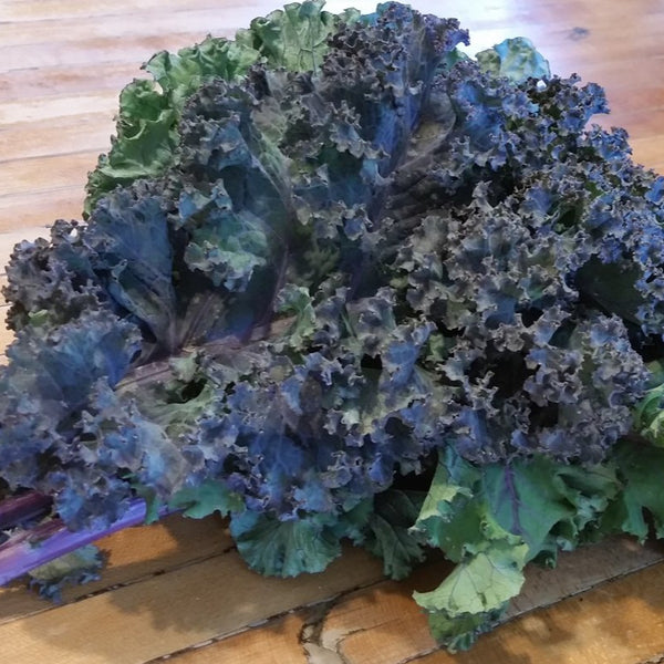 DHF Kale bunches, various