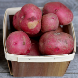PGF Potatoes, Red
