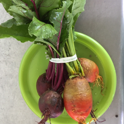 PGF Beets - Red, bunch