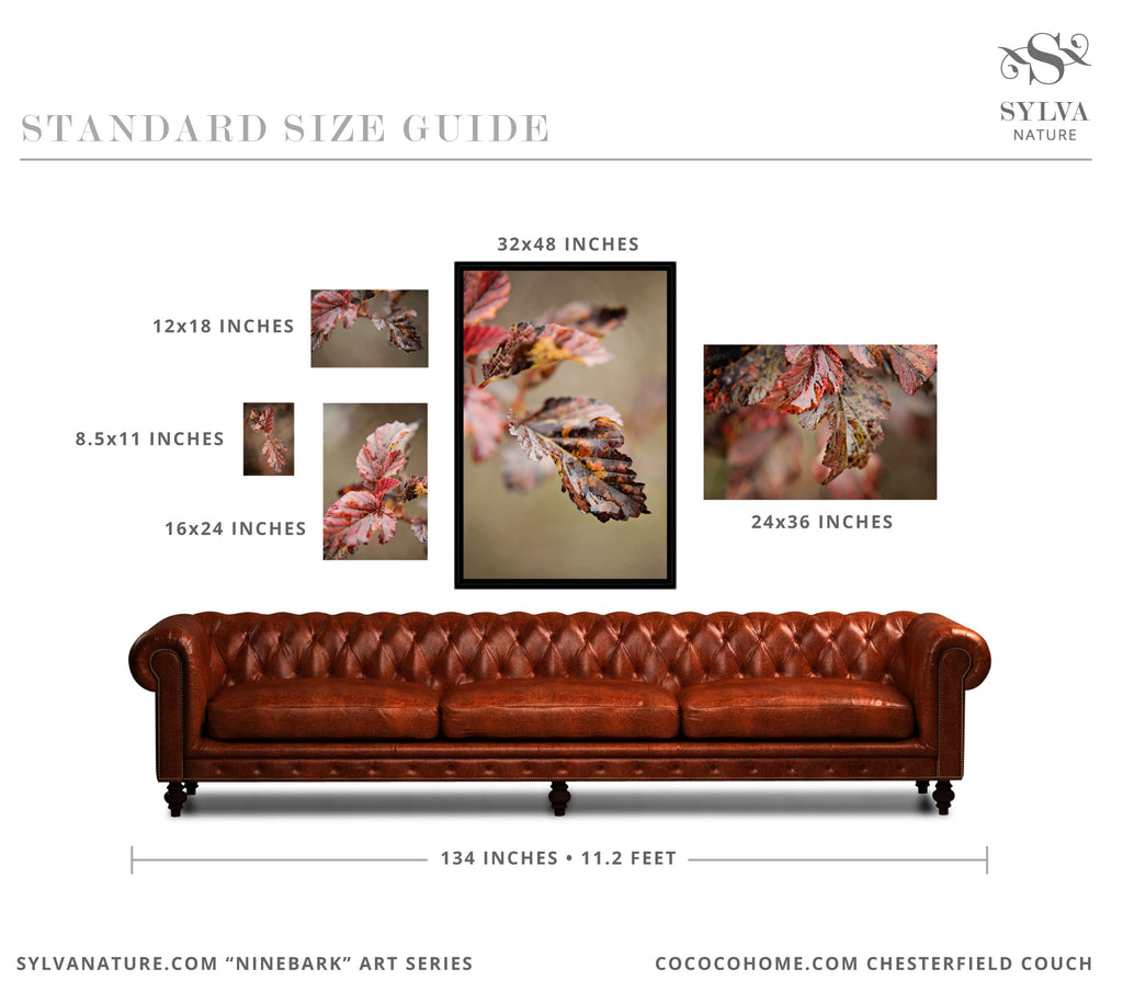 Sylva Nature Standard Art Size Guide
