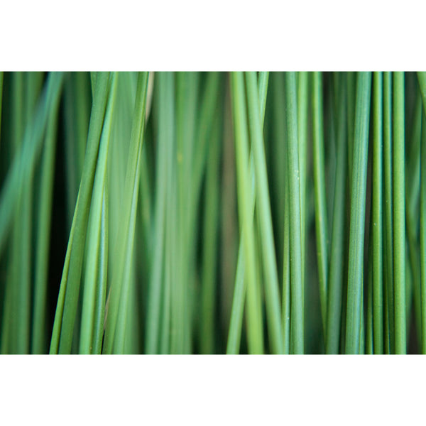Abstract Green Plants
