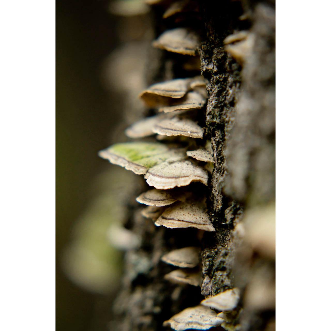Autumn Polypore Five