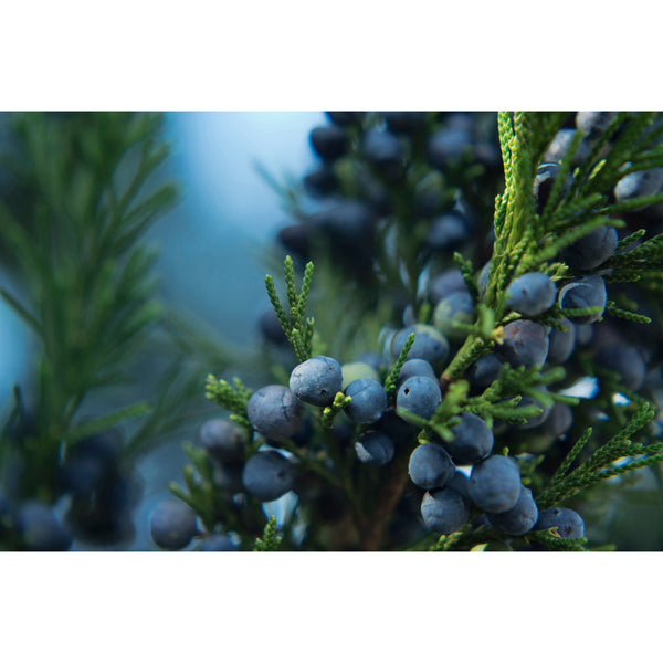 Juniper Berries Five