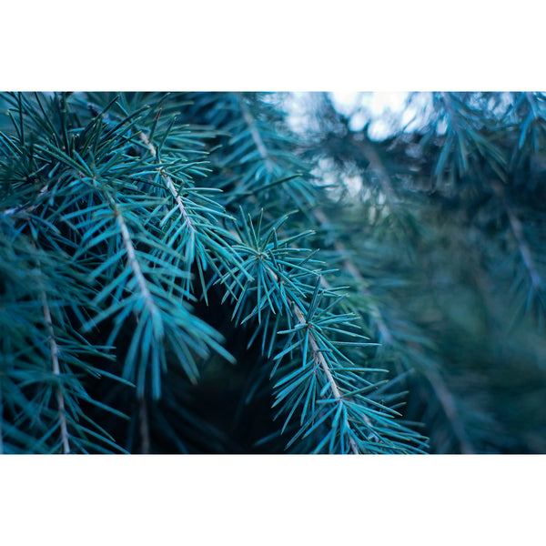 Evergreen Azure One