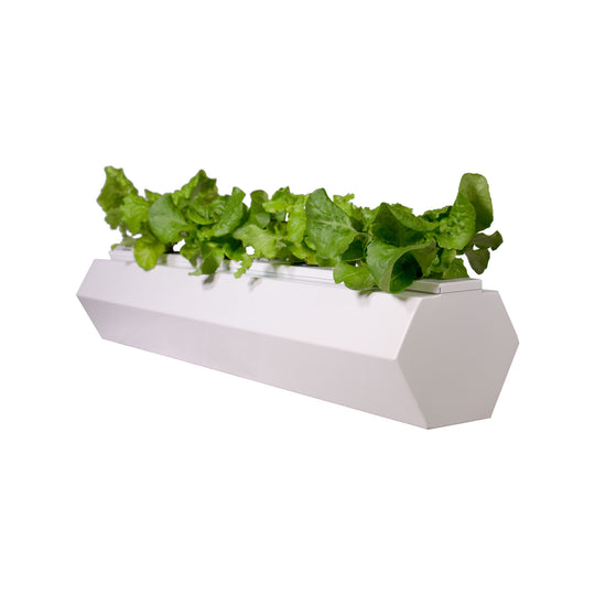 Hex Single Hydroponic Planter **Thank you for the great support - SOLD OUT for the season **