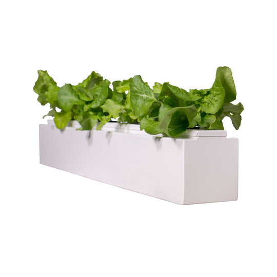 Square Single Hydroponic Planter
