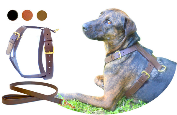 Tugby Classic Dog Harness Set & Lead in Premium Leather