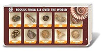 Fossils From all Over the World