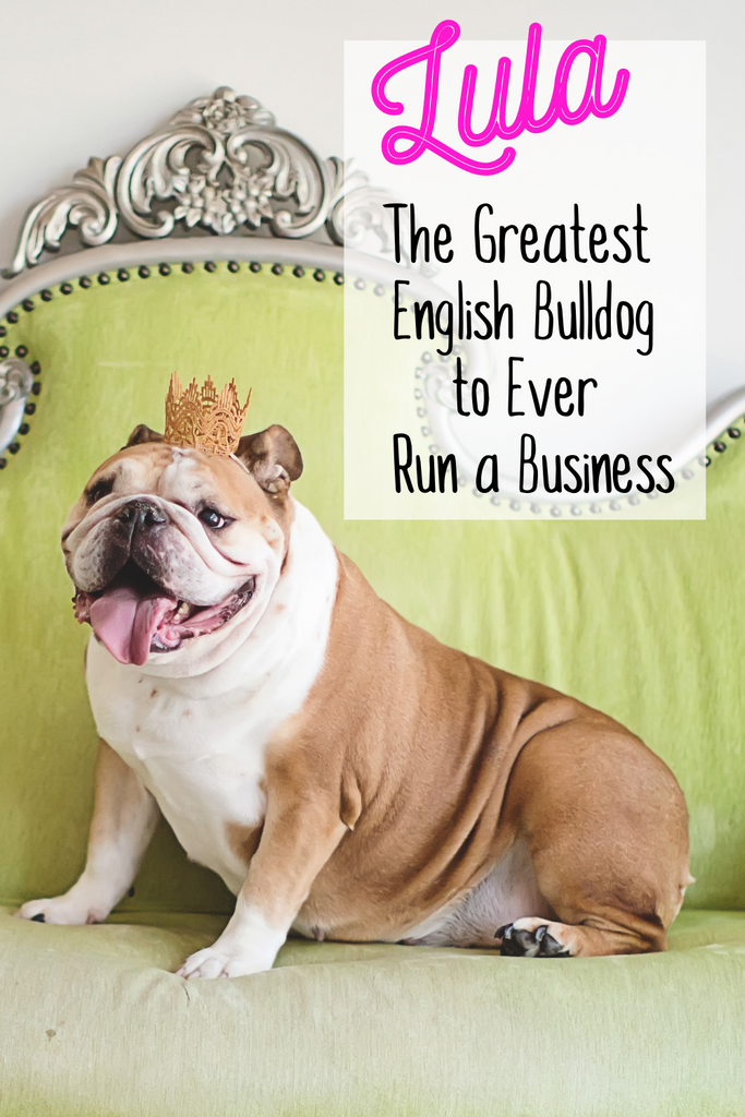 Lula, the Greatest English Bulldog to Ever Run a Business