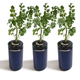 Sprigli Indoor Herb Garden Kit 3 Pack - Cilantro