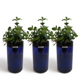 Sprigli Indoor Herb Garden Kit 3 Pack - Mint