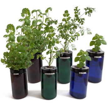 Sprigli Indoor Herb Garden Kit 3 Pack - Variety