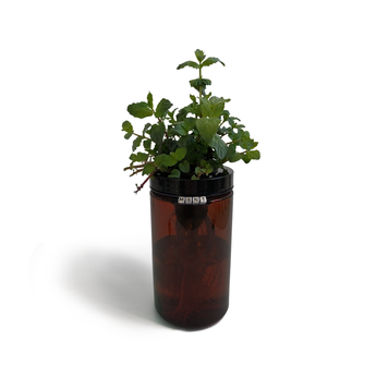 Sprigli Indoor Herb Garden Kit Mint - Amber
