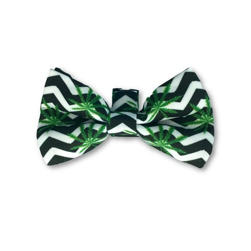Errly Bird Heady Pet Bow Tie - Chevron