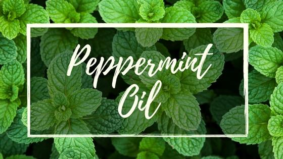 Benefits of Peppermint Essential Oil Nobody Told You