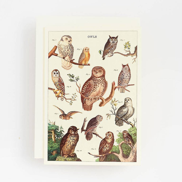 Botanical Owl Chart Card