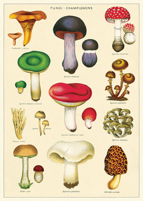 This print features reproductions of vintage mushroom images.