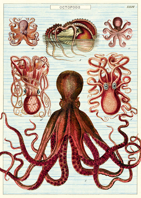 This print features reproductions of vintage octopods.