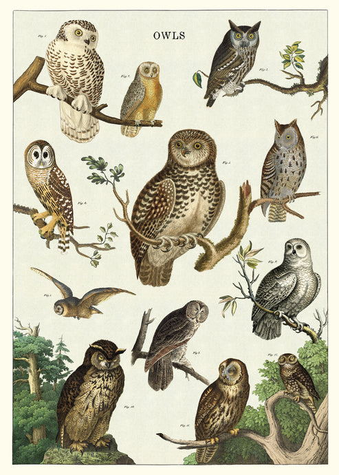 A beautiful and vivid chart of vintage owl images by Cavallini Co.