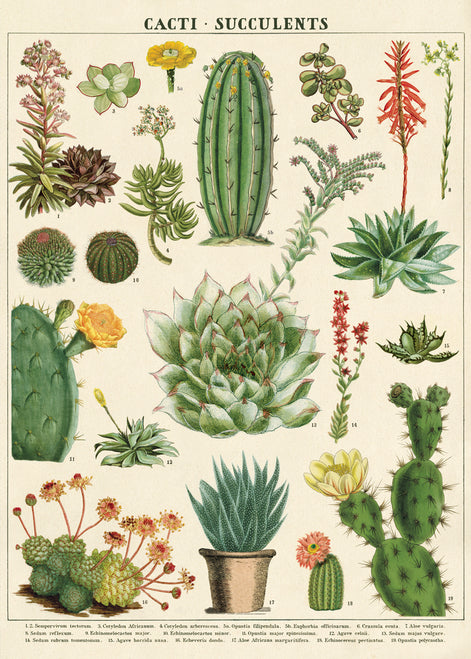 This beautiful print features vintage cacti and succulent images.
