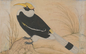 Great Hornbill | Artworks, Bombay Bungalow