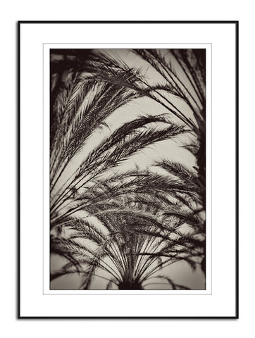 Fine Art Photo Palm tree