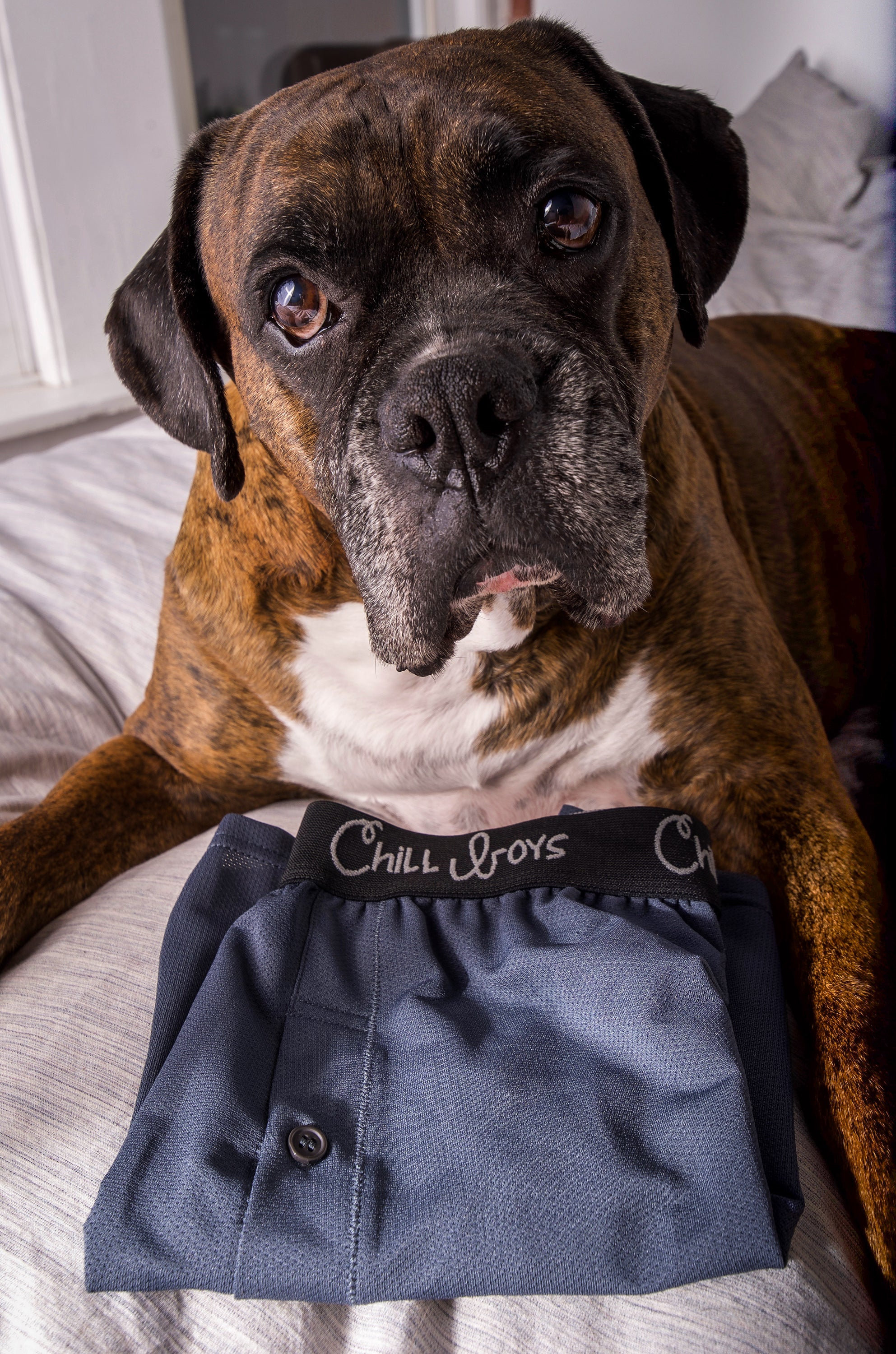 Boxer Dog with Grey Mens bamboo boxers