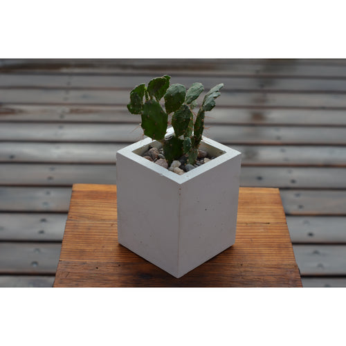 Pure White Concrete Planter, Small