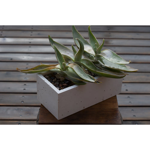 Pure White Concrete Planter, Trough