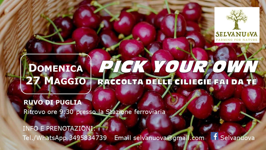 PICK YOUR OWN. Raccolta delle ciliegie fai da te